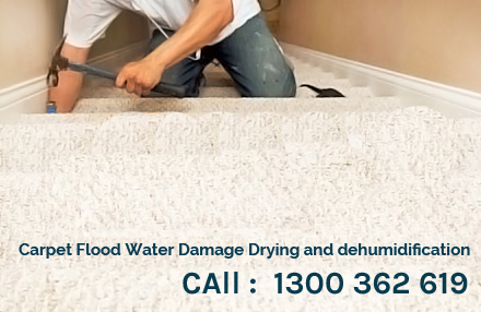 Carpet Mildew Cleaning Minto